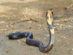 women bitten snake