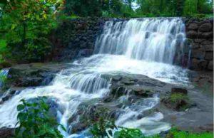percentage of water stored in Bhandardara dam and mula