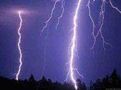 Accident lightning strike killed three animals